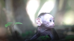 ugly monkey baby